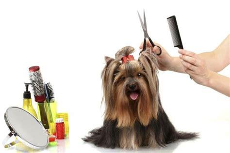 cortar el pelo a los perros c 243 mo cortar el pelo del perro animalesmascotas