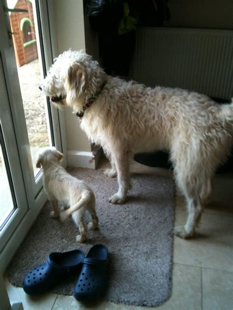 when is it safe to take puppy outside when is it safe to let my puppy outside intuition colin