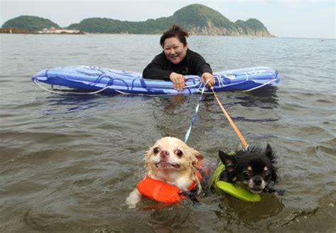 dog and boat puns go nautical boats boating storm stormy ocean rivarama