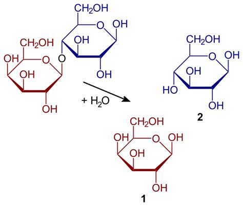 file hydrolysis of lactose svg wikimedia commons