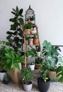 indoor plant display 19 best diy indoor garden decoration ideas balcony garden web
