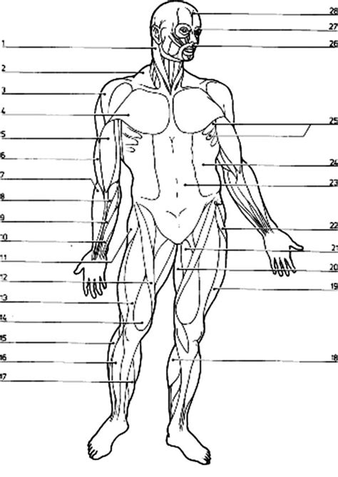 Muscular System Coloring Pages Muscular System Coloring Page Coloring Home by Muscular System Coloring Pages