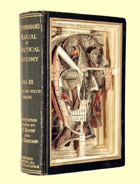 cabinet anatomy cabinet of curiosities wunderkammer anatomy antique