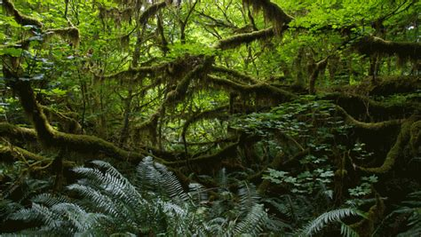 powerpoint themes jungle animation slide scrolling text over rainforest background