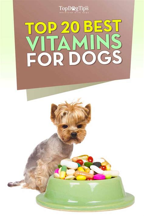 for dogs top 20 best vitamins for dogs in 2017 and why your