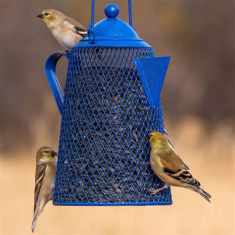 feeding backyard birds 90 best feeding backyard birds images on pinterest