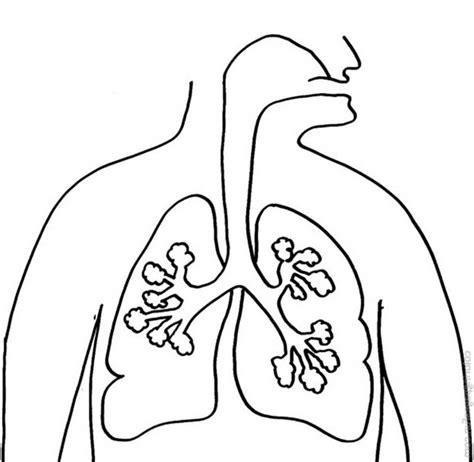 coloring pages of heart and lungs related keywords suggestions for lungs coloring