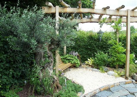 mediterrane gärten bilder mediterraner garten mit uraltem olivenbaum und pergola