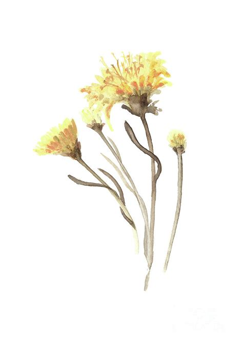 aster yellow flower abstract art print asters watercolor