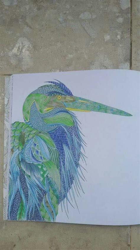 millie marottas animal kingdom 1849943532 108 best images about millie marotta colouring books on herons animals and tropical