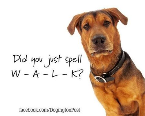 how to spell puppy 17 best images about humorous and beautiful quotes on best dogs