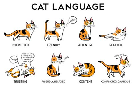 Habits Simon S Cat Guide To decipher your cat s language with this helpful