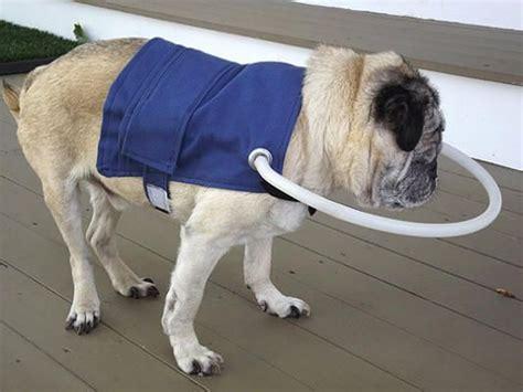 blind dogs blind vest omg