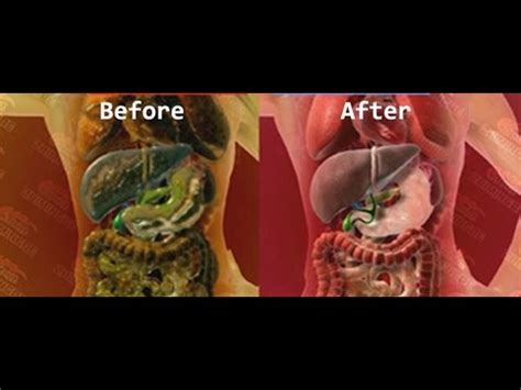 Fda Approved Detox by Fda Approved Best Herb Rapid Whole Cleanse