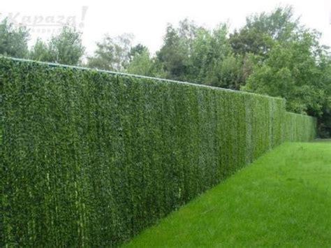 de tuinen gratis verzenden 17 beste afbeeldingen over tuin op pinterest tuinen