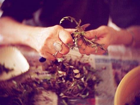 tarassaco in cucina tarassaco controindicazioni tintura madre