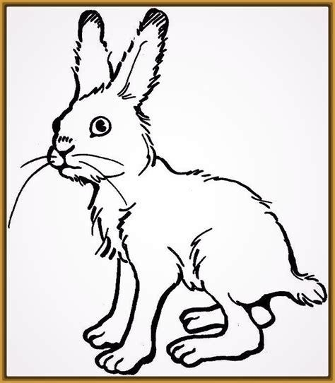 imagenes reales faciles de dibujar imagenes de conejos faciles de dibujar imagenes de conejitos