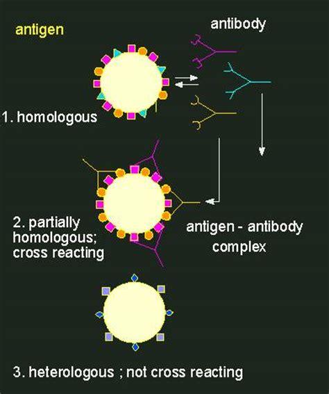 explain the antigen antibody reaction diagram antigen antibody reactions