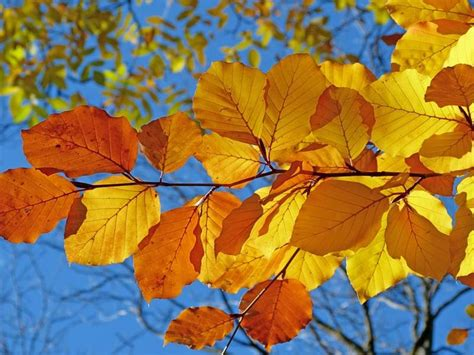 when do leaves change color 2017 fall foliage in silver when will the leaves