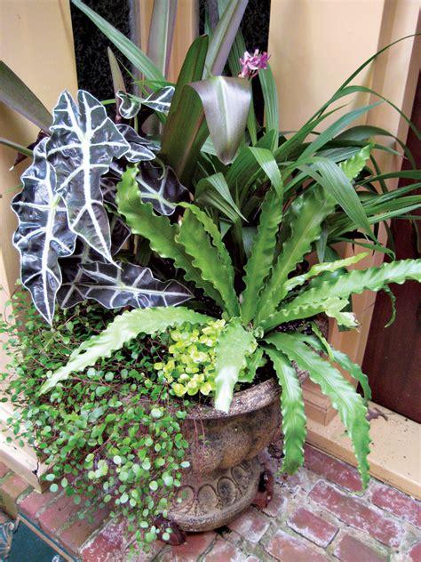 unique indoor plants the gallery for gt unique indoor plants