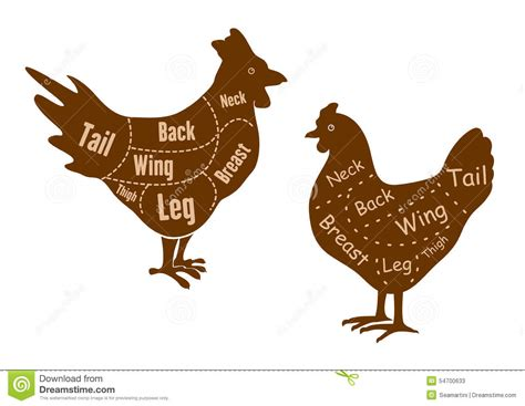 rooster and hen butcher cuts diagram stock vector image