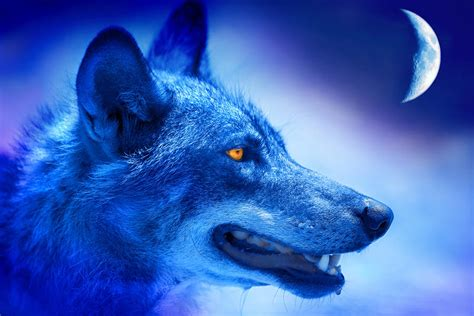 Most Popular Favorite Colors by Alpha Wolf By Mal Bray
