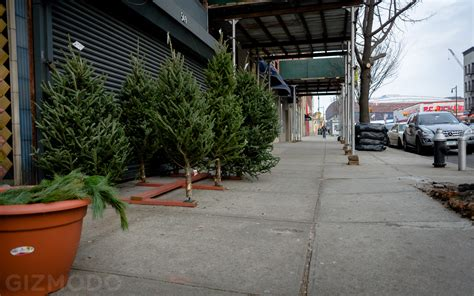 photo essay nyc s incredible christmas tree seller