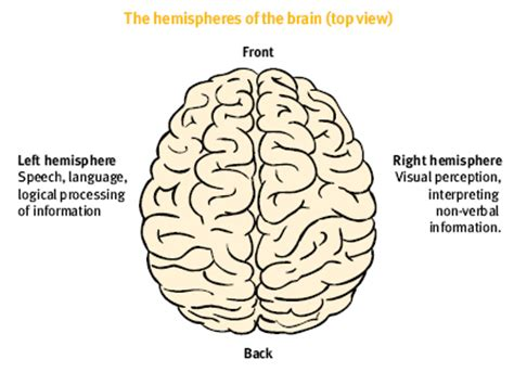 brain diagram top view consumer and support project