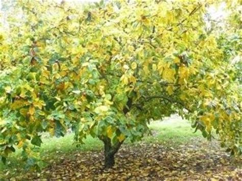 fiori alberi da frutto alberi da frutto piante da giardino