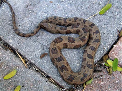 Snake In The Backyard by Terra Mirabilis A Backyard Snake