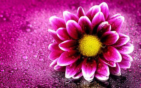 Wallpaper 4k Flower   pink flower 4k wallpapers hd wallpapers id 19676