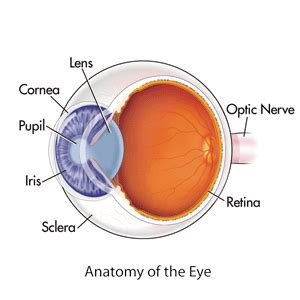 laser eye surgery information & methods | cleveland clinic
