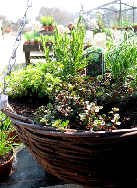 hanging herb planter hanging herb baskets how to make an herb garden in a basket