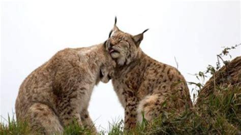 10 foto perilaku hewan yang bisa membuatmu meleleh wallpaper koleksi gambar hewan foto nyamuk