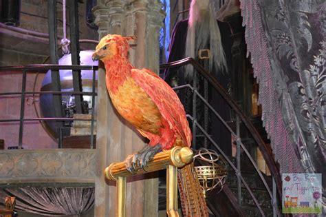 the real fawkes books feathers and flight at warner bros studio tour the