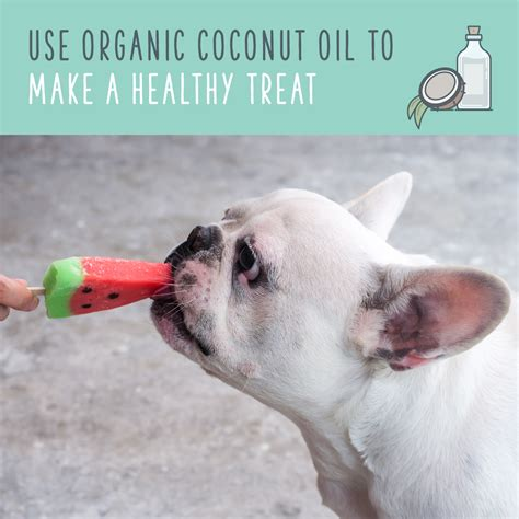 dogs and coconut coconut for dogs an eco friendly way to pet health