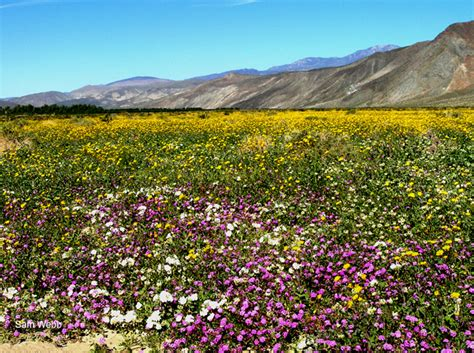 borrego bloom borrego in bloom tales from the legend