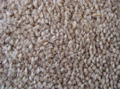 how to get urine out of carpet how to get urine smell out of carpet and padding ehow