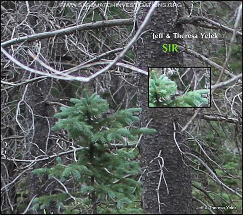 best bigfoot bigfoot evidence this is still one of the best bigfoot
