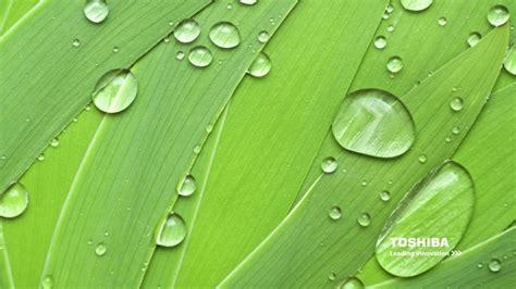 wallpaper toshiba leading innovation desktop wallpapers green wallpaper wallpaper