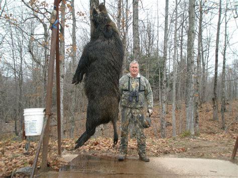 large russian boar russians warning bring a trusted friend boar