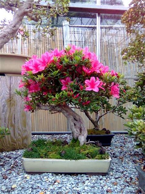 garten bonsai winterfest machen grundlagen bonsaipflege ch