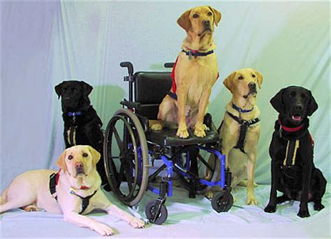 va service dogs service dogs archives veteran traveler