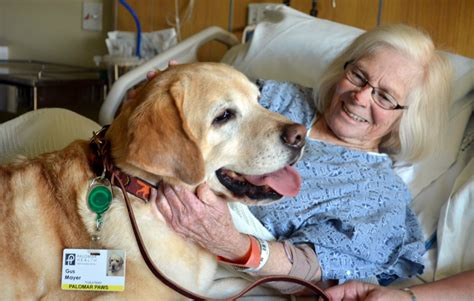 for dogs to be a therapy pet therapy might not be as helpful as think researcher says