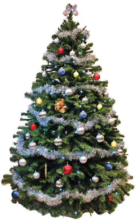 best real christmas trees by me don t forget your office tree 171 shipshape cleaning news high wycombe bucks uk