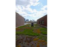 apex green roofs professional green roof design greenroofs com projects rowland institute at harvard