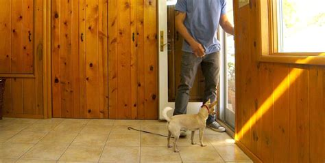 How To Prevent Your Dog From Running Out The Front Door Out The Front Door