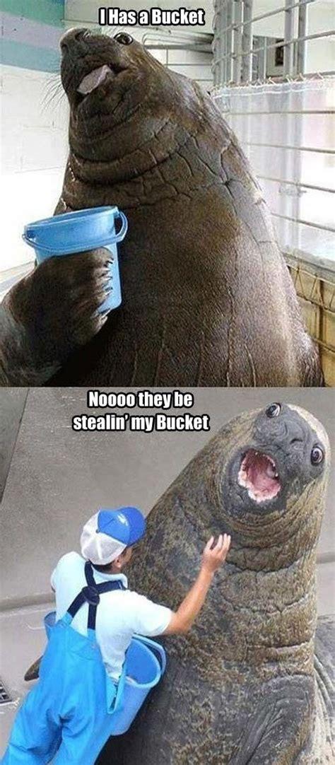 Meme Bucket - bucket meme funny pictures quotes memes jokes