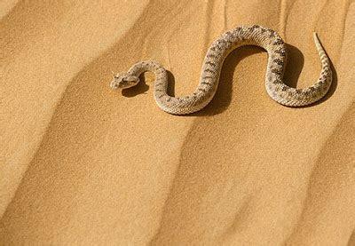 imagenes animales que reptan el planeta de miguel las serpientes