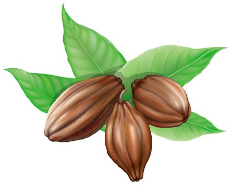 chocolate clipart bean clipart cocoa bean pencil and in color bean clipart